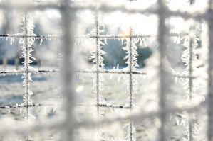 Winter Wonder through the wire by LW-M-E-D-I-A