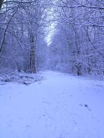 snowy fields -forests- 62 by dark-dragon-stock
