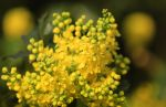 Symphony in Yellow by plumita1