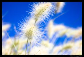Summer Breeze by rylphotography
