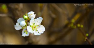 Spring Has Arrived 1 by omergafla