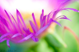 Macro Flower III by Eowyn-86