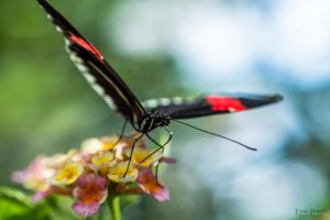 Butterfly by AlopexXx
