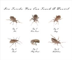 Tricks You Can Teach A Weevil by HKDP