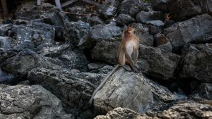 The Monkey of Ao Nang by RLPhotographs
