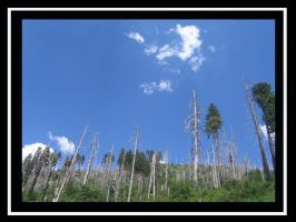 Silent Trees by BlueArctic4