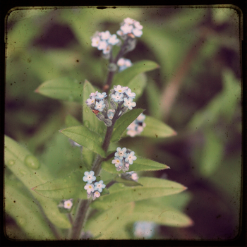 Forget Me Not by tonekj