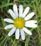 Daisy And Dew by seaglasshunter