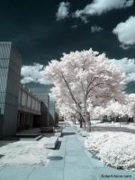 Infrared IX by ilimel