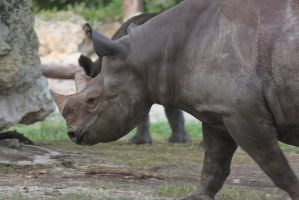 00250 - Horned Rhino Profile by emstock