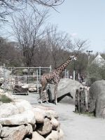 Roger Williams Park Zoo XI by 3dmirror-stock