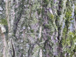 wood_texture_6 by pebe1234