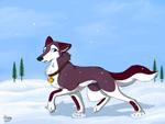Snow Dog by Elana-Louise