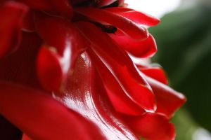 Tropical Flower 7 by w-shayler