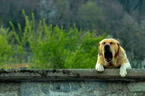 dog by mirko84
