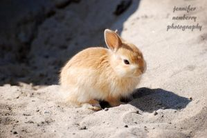 Little Beige Bunny by filemanager