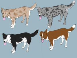 Border Collie Imports CLOSED by 4dogowner