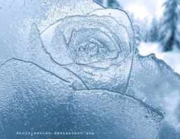 Ice Rose by SinInjection