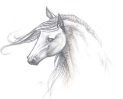 Andalusian mare by who-stole-MY-name