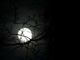 Mystical Night... by Michies-Photographyy