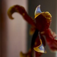 just an orchid by m-lucia