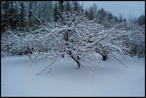 Winter Wonders VII by Eirian-stock