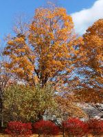 Autumn Color in New England 5 by Reddawgi