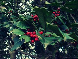 Holly and Berries 2 by lloviendo-amor