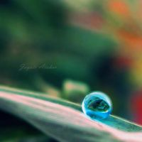 blue drop by Photoloaded