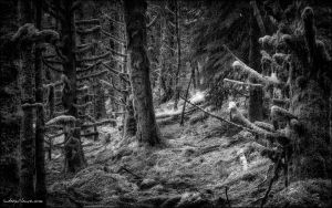 Into The Woods by indeepsilence