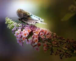 Buddleia and Butterfly V by Foxytocin