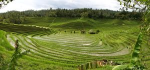 panorama bali rice terraces 2 by melmarc