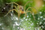 spider web with water droplets 3 by a6-k