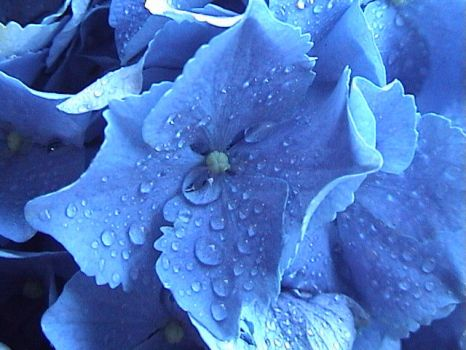 Blue Watered Flowers by filth666