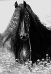 Friesian Horse by Yankeestyle94