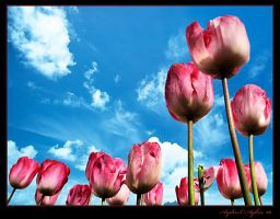 Tulip Time in Botanical Garden by WhiteWay