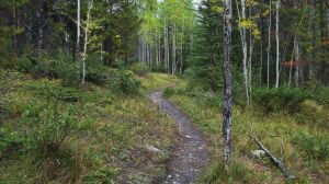 Nordic Centre Trails by DTherien