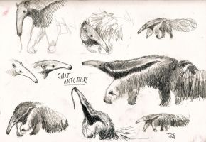 ANTEATERS by agentcoleslaw