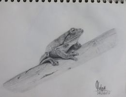 Green Frog by vlqart