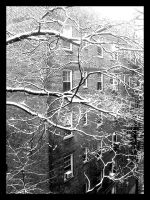 snow on the branch by t3nshi