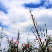 Dragonflies by silentvico