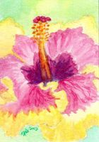 ACEO - Watercolor Flowers 005 by strryeyedreamr27