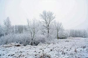 winterland1 by priesteres-stock