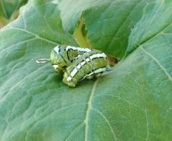 Green and White Striped Caterpillar by CaterpillarArts