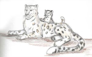 Snow leopard by Rahball