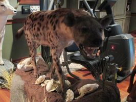 Hyena mount with skulls by Skybird99