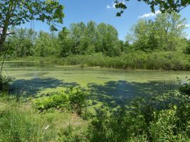 TNT Area - Pond by Path S7 2 by Sneas