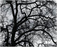 Complex Branches by Bloody-Medium