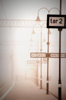 foggy by Shreever