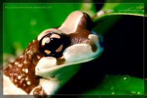Amazon Milk Frog 4 by theperfectlestat